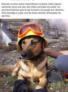 Ecuador_RescueDogs